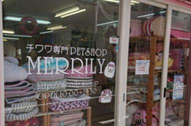 チワワ専門店PETSHOP /MERRILY(メリリー)
